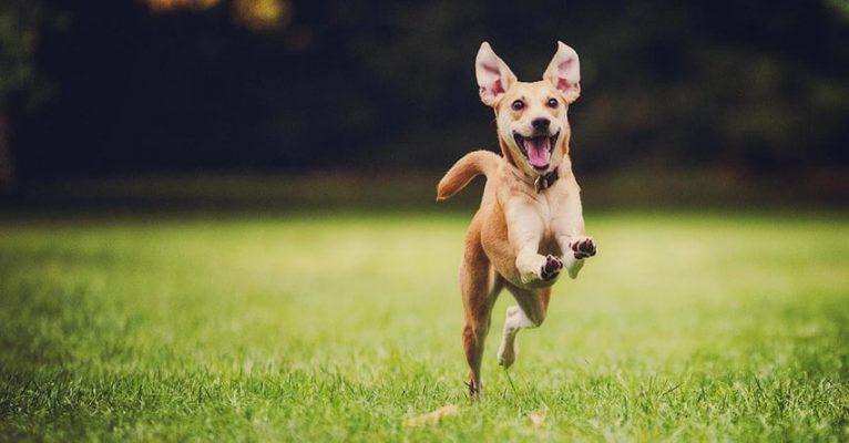Thời gian trôi nhanh như chó chạy ngoài đồng